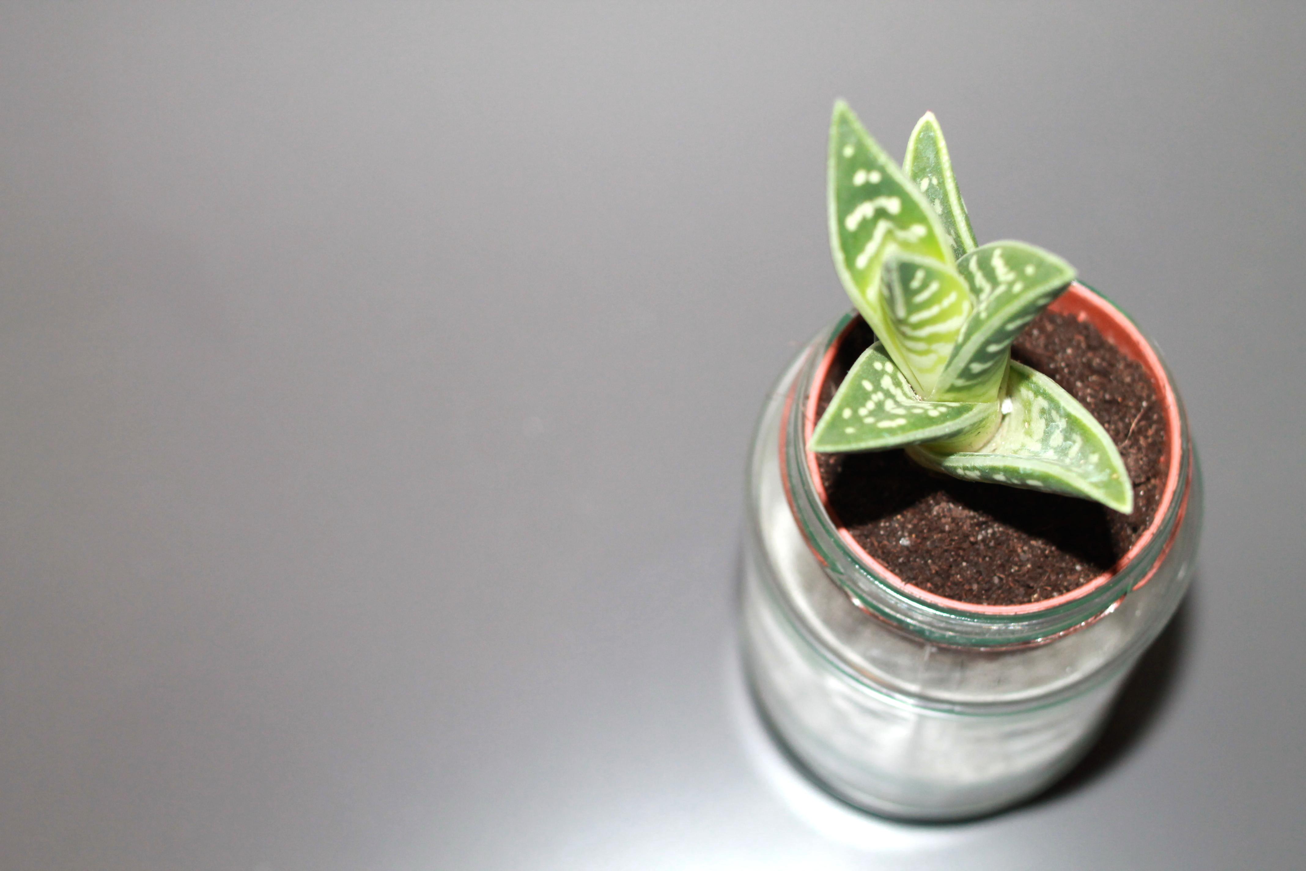 Mini-DIY: Baby-Sukkulente im Glas als Gastgeschenk