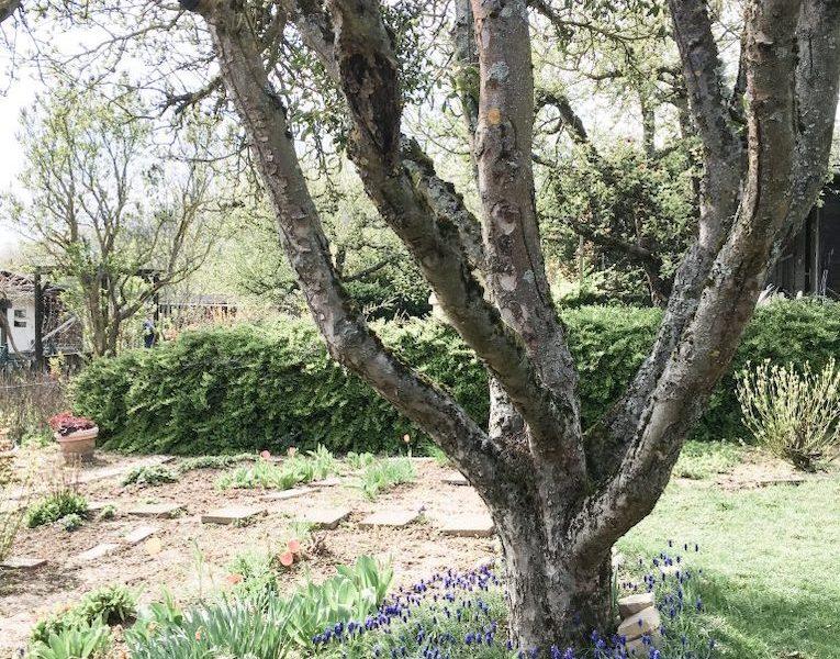 Warum wir plötzlich Schrebergärtner sind und wie auch Du einen Garten findest